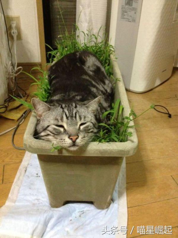 家裡的綠植經常被喵星人無情撕咬。為什麼貓咪會總想吃草? - 每日頭條