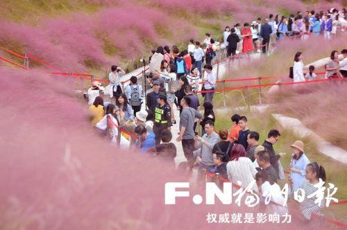 福州網紅花草「粉黛亂子草」在哪可以看?花期到什麼時候 - 每日頭條