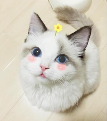 最新韓劇《今生是第一次》男主養的貓是什麼品種 - 每日頭條
