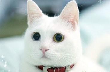 冬天養貓要注意什麼問題?怎麼給貓咪保暖? - 每日頭條