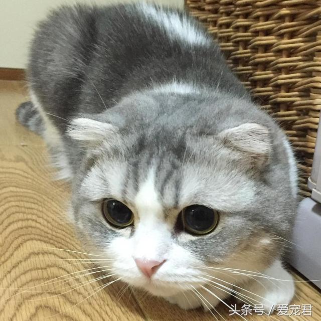 帶貓咪去短途旅行有哪些需要注意的事項呢 - 每日頭條
