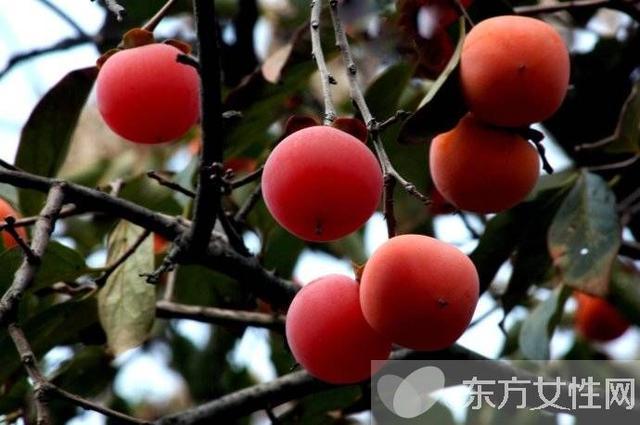 吃柿子的禁忌有哪些 柿子相剋食物大盤點 - 每日頭條