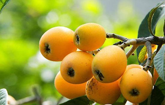止咳化痰的水果。這7大止咳化痰的水果最有用 - 每日頭條