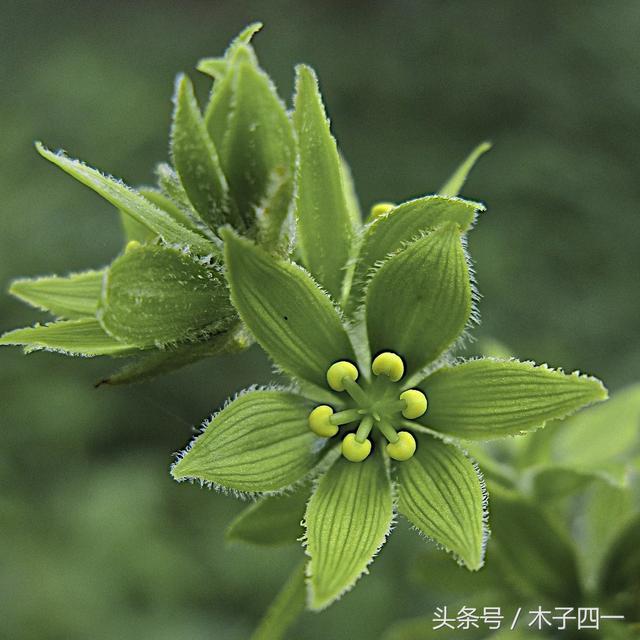 綠色的葉子常見,反而成就了經典 - 每日頭條