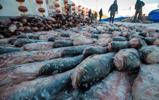 吉林查干湖冬捕大豐收,用魚磊起高高的「魚牆」供遊客欣賞 - 每日頭條