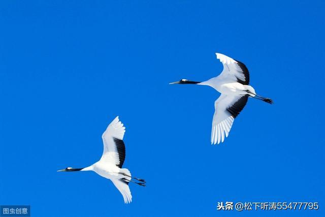 神奇的動物之謎5 候鳥在遷徙的時候靠什麼導航? - 每日頭條