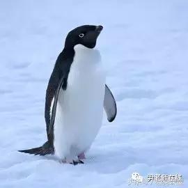 動物百科 全世界的企鵝有18種 - 每日頭條