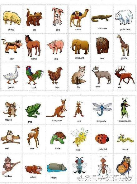 英語學習隨筆:各類動物的英文詞彙大全 - 每日頭條