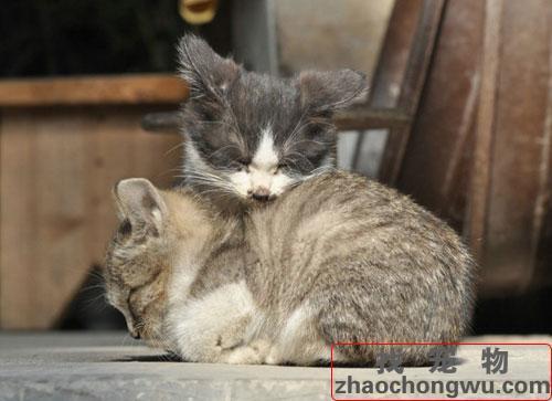 寵物貓貓名字大全。貓貓名字大全 - 每日頭條