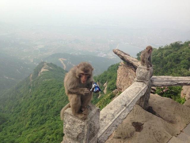沐猴而冠帶。知小而謀強 - 每日頭條