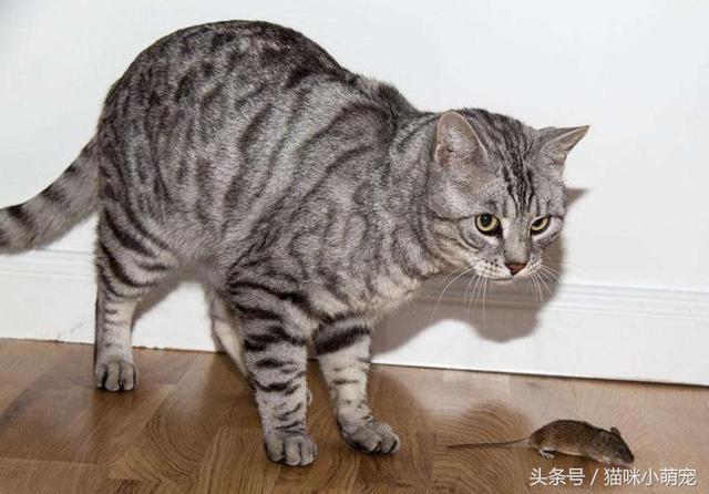 貓咪的智商到底有幾歲?他們和人類到底有多大差別? - 每日頭條
