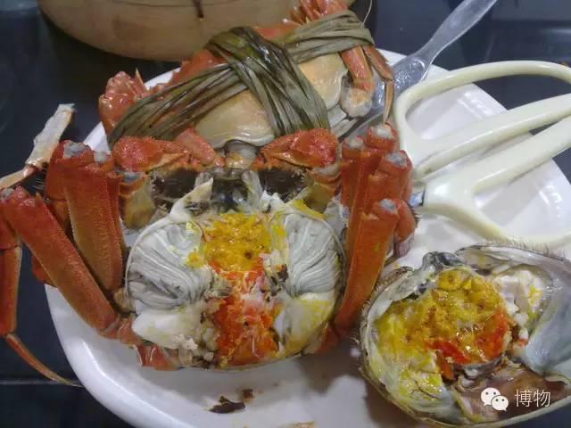 螃蟹肚裡內容多 你卻無從下手? - 每日頭條