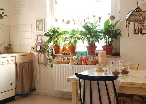 風水主題——植物擺放風水 - 每日頭條