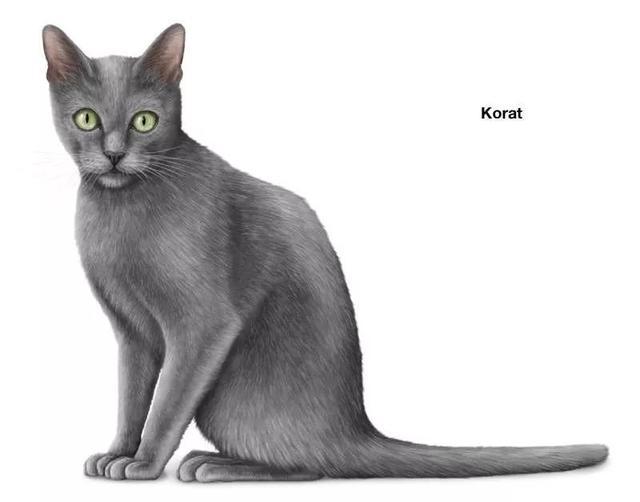 英語科普   Shorthair Cat Breeds 短毛貓品種大全 - 每日頭條