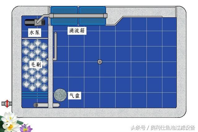 陽臺魚池如何做一個精緻的過濾凈化系統? - 每日頭條