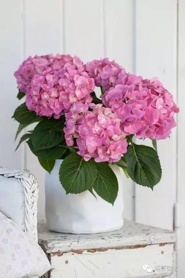 花開繁盛還耐陰,用它們來拯救你家光照不足的空間吧! - 每日頭條