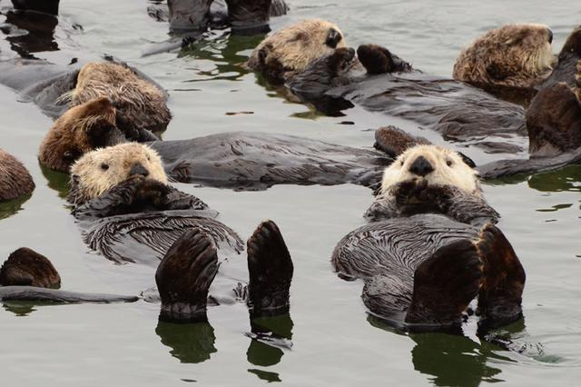 動物的睡姿有多萌。你知道嗎? - 每日頭條
