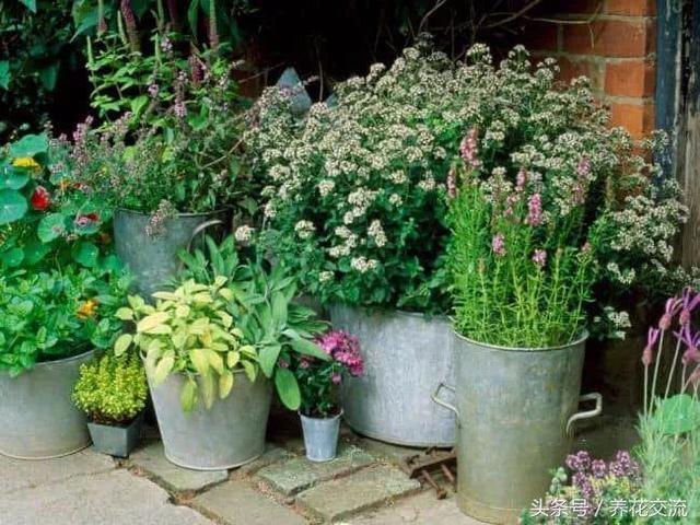 園藝新手應該掌握的12個養花基本技巧,盆栽植物想要養死都難 - 每日頭條