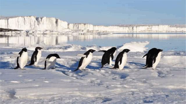 南極和北極到底哪個更冷一些呢?看完還是覺得企鵝厲害,更耐冷 - 每日頭條