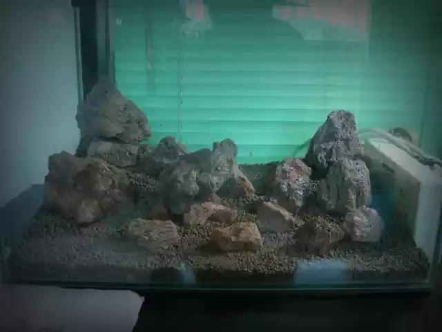 家居水景丨迷你矮火山石小缸成景過程欣賞 - 每日頭條