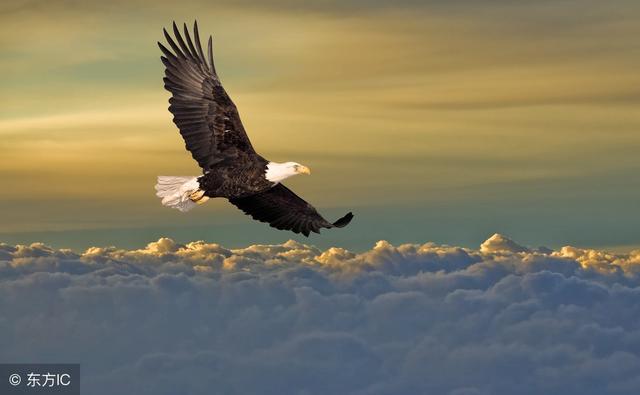是雄鷹,就要搏擊長空,做展翅高飛的英雄 - 每日頭條