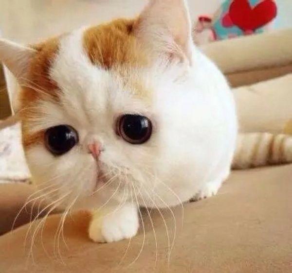 為什麼貓咪眼屎很多? - 每日頭條
