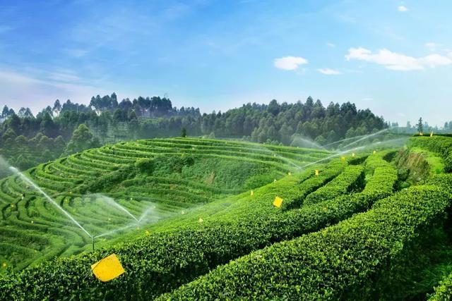 愛茶的成都人不會錯過的大大大事!竹葉青請全城喝國禮茶! - 每日頭條