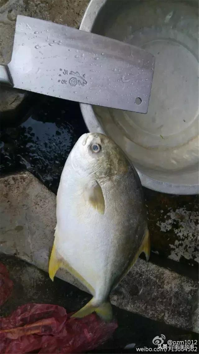 潮汕人日常吃的55種魚,最常見的野生海鮮,美味而不貴 - 每日頭條