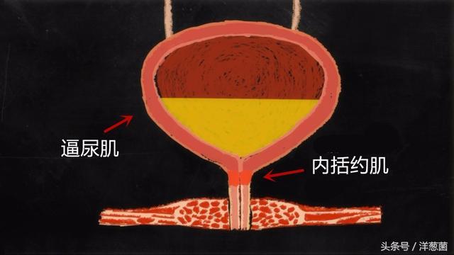 憋尿會對身體有什麼影響呢 - 每日頭條