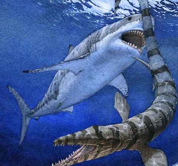 最兇猛的中生代鯊魚。攻擊海王龍的白堊刺甲鯊 - 每日頭條
