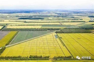 【植樹節】盡己之力:築起中國綠色長城 - 每日頭條