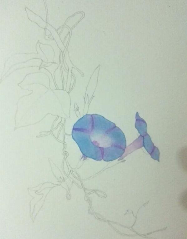 水彩牽牛花畫法,讓你三分鐘畫一幅水彩畫,一起來學習吧 - 每日頭條