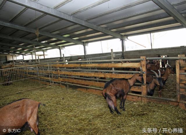 100隻羊需要多大場地?繁殖和育肥有什麼不同? - 每日頭條