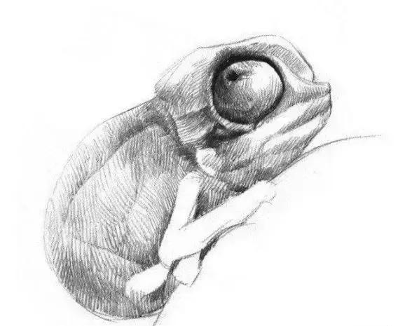 素描小變色龍的畫法教程 - 每日頭條