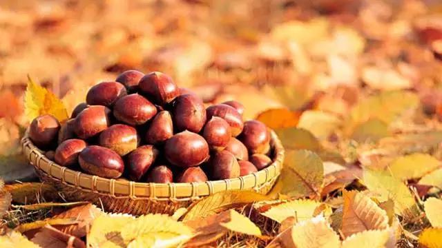 秋季吃栗子。美味又養生 - 每日頭條