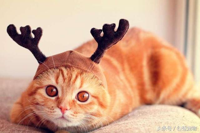 養貓須知:怎麼樣才可以挑選到好的貓咪化毛膏 - 每日頭條