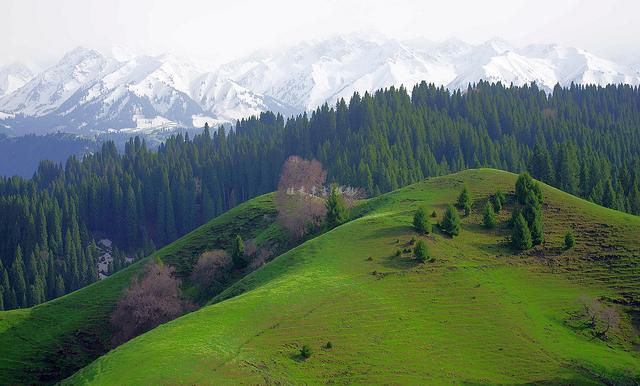 新疆的春天。 伊犁 恰西——庫爾德寧草原風光(原創圖集二) - 每日頭條