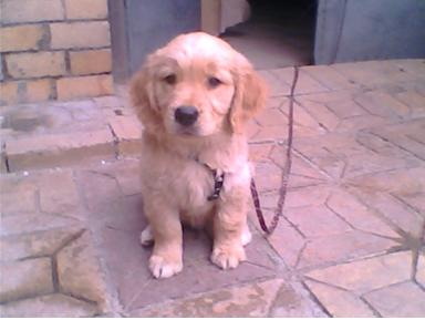 寵物狗方便適合在陽臺餵養嗎?你怎麼看! - 每日頭條