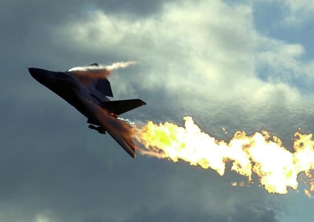澳大利亞居然出動空軍來對付這種可愛的動物。放中國這都不叫事 - 每日頭條