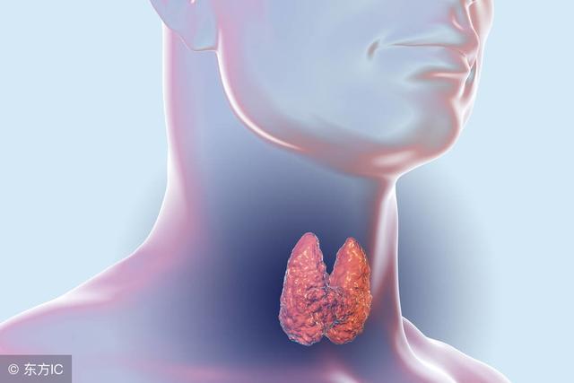 李連杰身體欠佳,我們的身體里「甲狀腺」扮演一個怎樣的角色呢? - 每日頭條