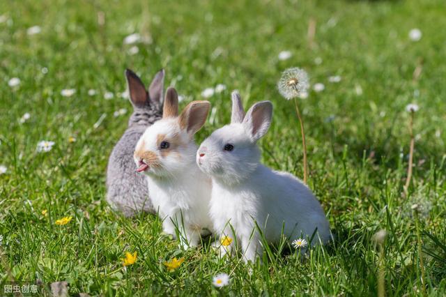 幼兔子怎麼養。兔糧請務必有限量供應 - 每日頭條