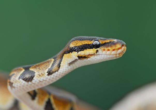 屬蛇人「最命苦」的出生年份。你家有沒有?自己來看看。據說很準 - 每日頭條