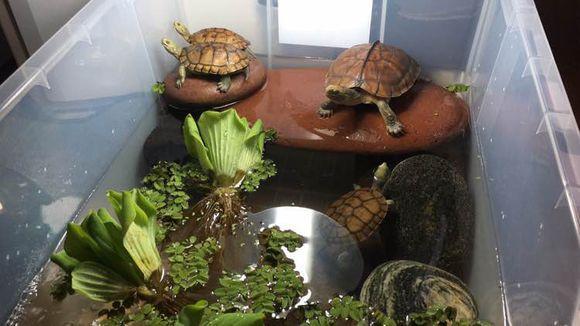 烏龜環境,龜友的陽臺龜缸造景欣賞 - 每日頭條
