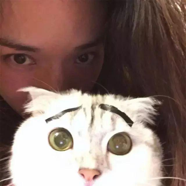 舒淇:「我對貓嚴重過敏,我依舊堅持養貓!」 - 每日頭條