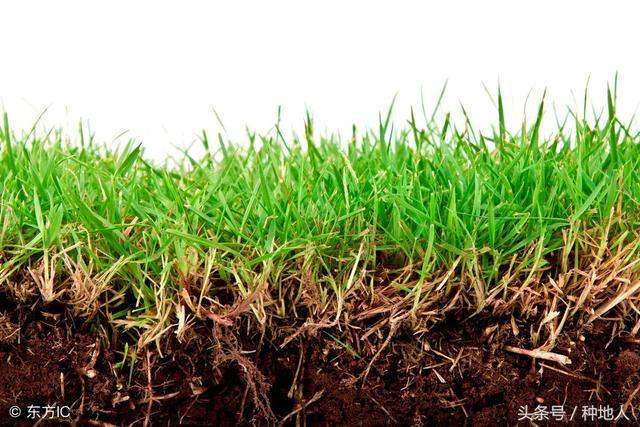 土壤「有機質」高,土壤免疫力就高,作物才能健康成長! - 每日頭條