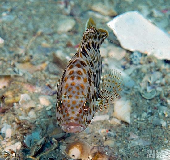 石斑魚養殖技術 - 每日頭條