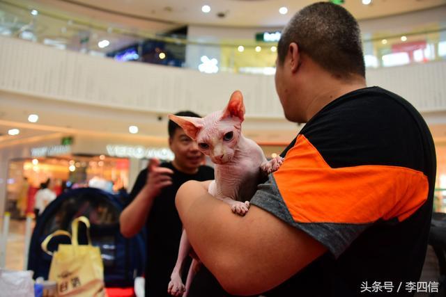 鄭州:百隻貓咪同臺媲美 有的身價或超10萬 - 每日頭條