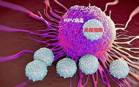 對話HPV病毒感染。感染科醫師說:轉陰不是什麼難事 - 每日頭條