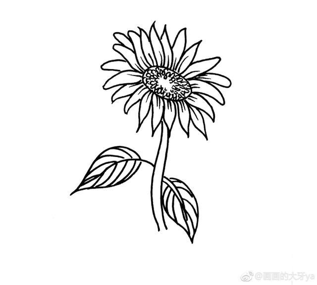 向日葵 - 每日頭條