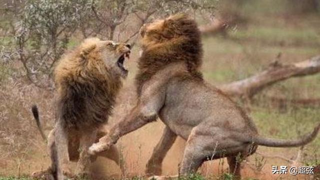 你見過交配時間最長的動物嗎?這種動物用一生在「交配」 - 每日頭條